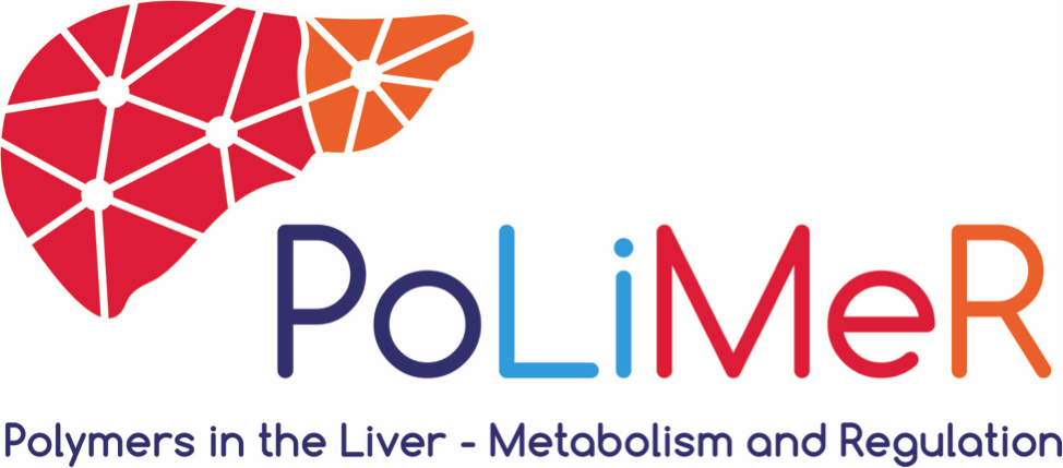 Polymers in the Liver: Metabolism and Regulation